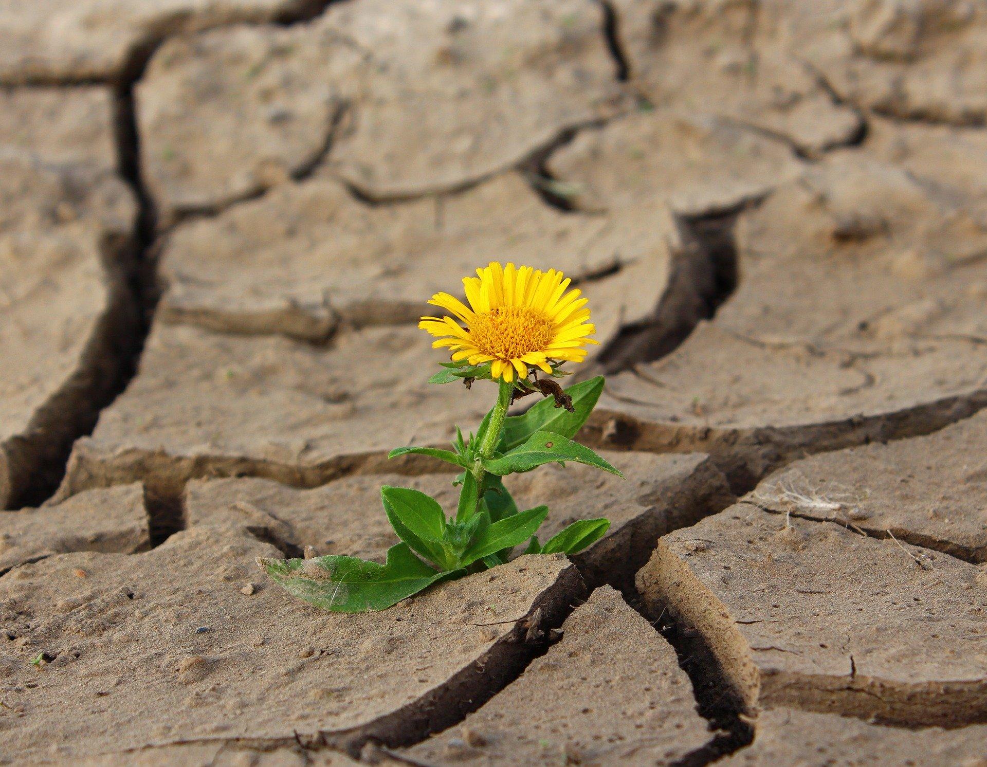 Tras el suicidio de un ser querido nada vuelve a ser igual, pero es posible seguir adelante.